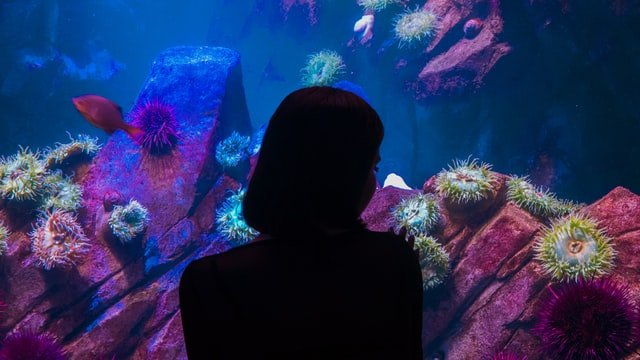 Ripley's Aquarium Of Canada10 best places to visit in canada discover fantastic vdiscovery arvinovoyage