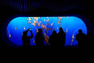Monterey Bay Aquariumfamous virtual tours online you can take on your couch vdiscovery arvinovoyage
