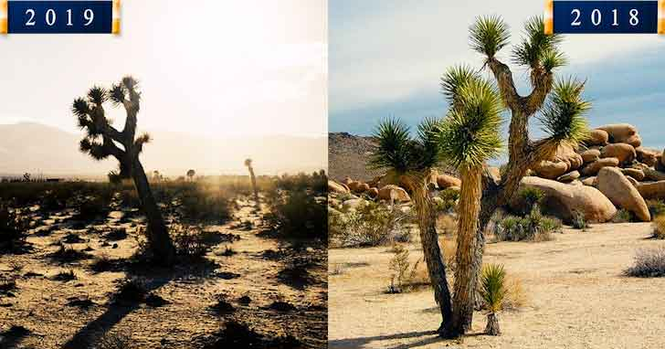 Joshua Tree 20 popular tourist locations under threat that are dying vdiscovery arvinovoyage
