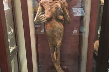 International Cryptozoology Museum32 weirdest museums in the world that are actually disturbing vdiscovery arvinovoyage