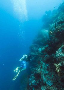 Menjengan sorkeling and diving 10 best bali beaches vdiscovery arvinovoyage