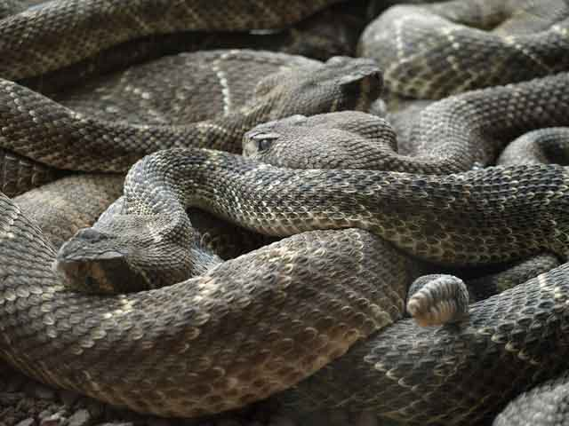 Snake Island tired of ordinary travel this is the most dangerous tourist place in the world