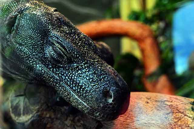 Jurassic Park Project :  Komodo Island Indonesia – What you need to know