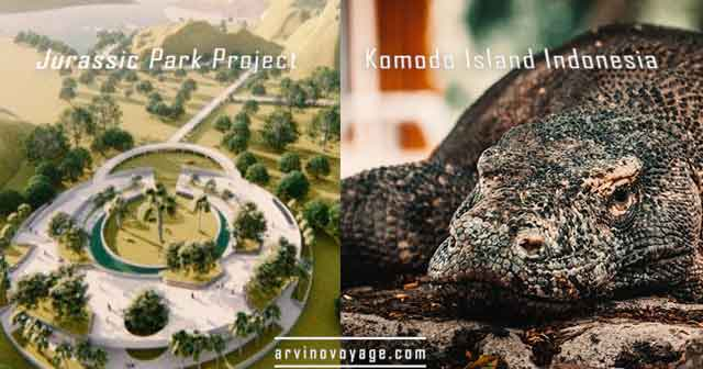 jurassic park project komodo island indonesia what you need to know vdiscovery arvinovoyage