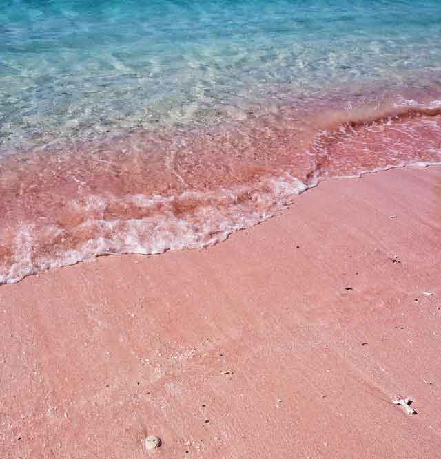 Pink-Beach-Komodo-Island-snorkeling-for-beginners-in-indonesia-top-31-destinations-that-will-blow-you-away-vdiscovery-arvinovoyage