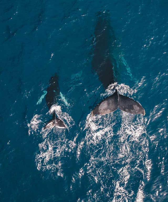 Whale-watching-the-azores-europe's-hawaii-top-11-things-to-do-in-islands-of-adventure-arvinovoyage